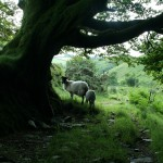 Dartmoor valley2